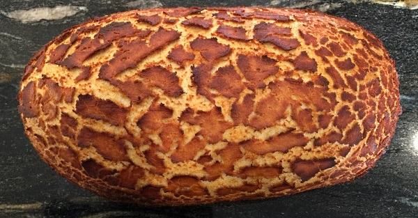 A bloomer-shaped loaf with tiger markings