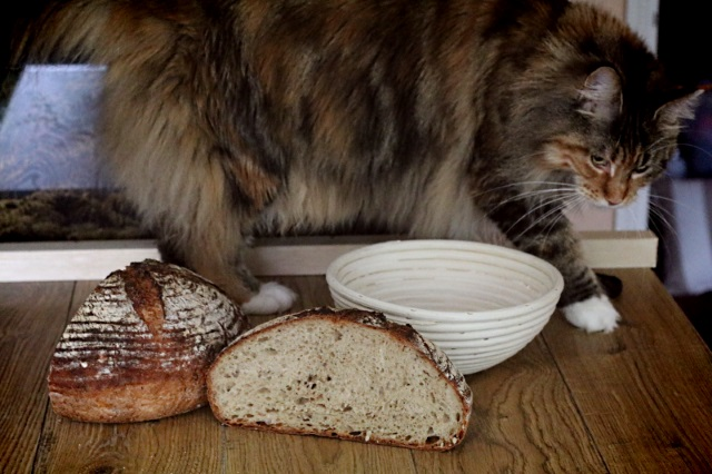 Sometimes the cat wants to be involved in the food photography